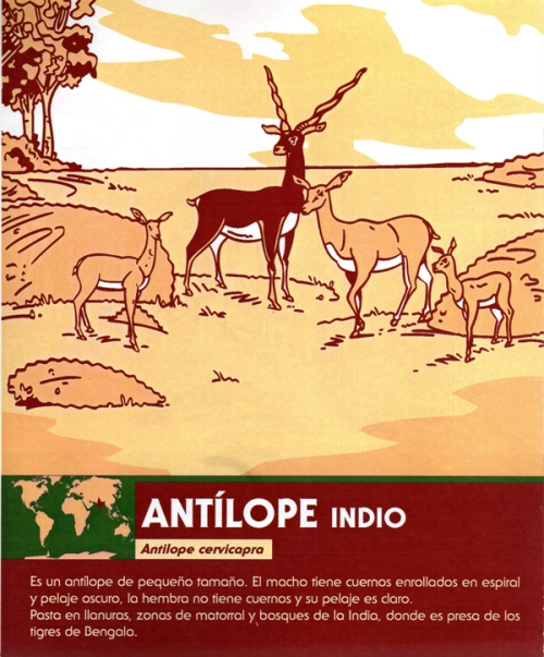 01-antilope-indio