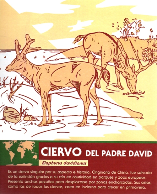 04-zoo-ciervo-del-padre-david
